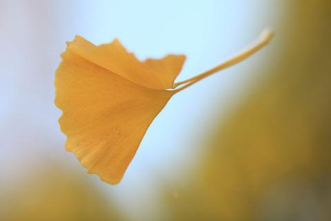 秋は「抜け毛」の季節です