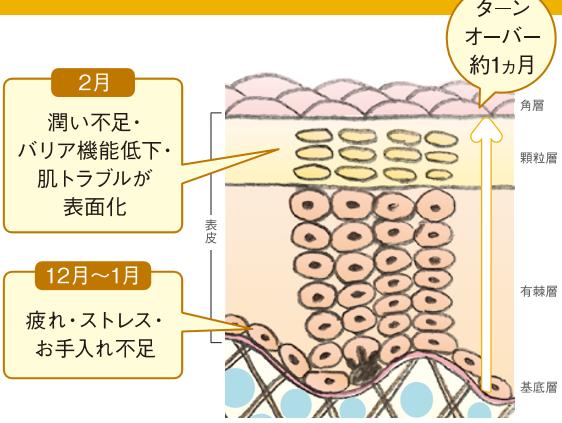 皮膚構造図