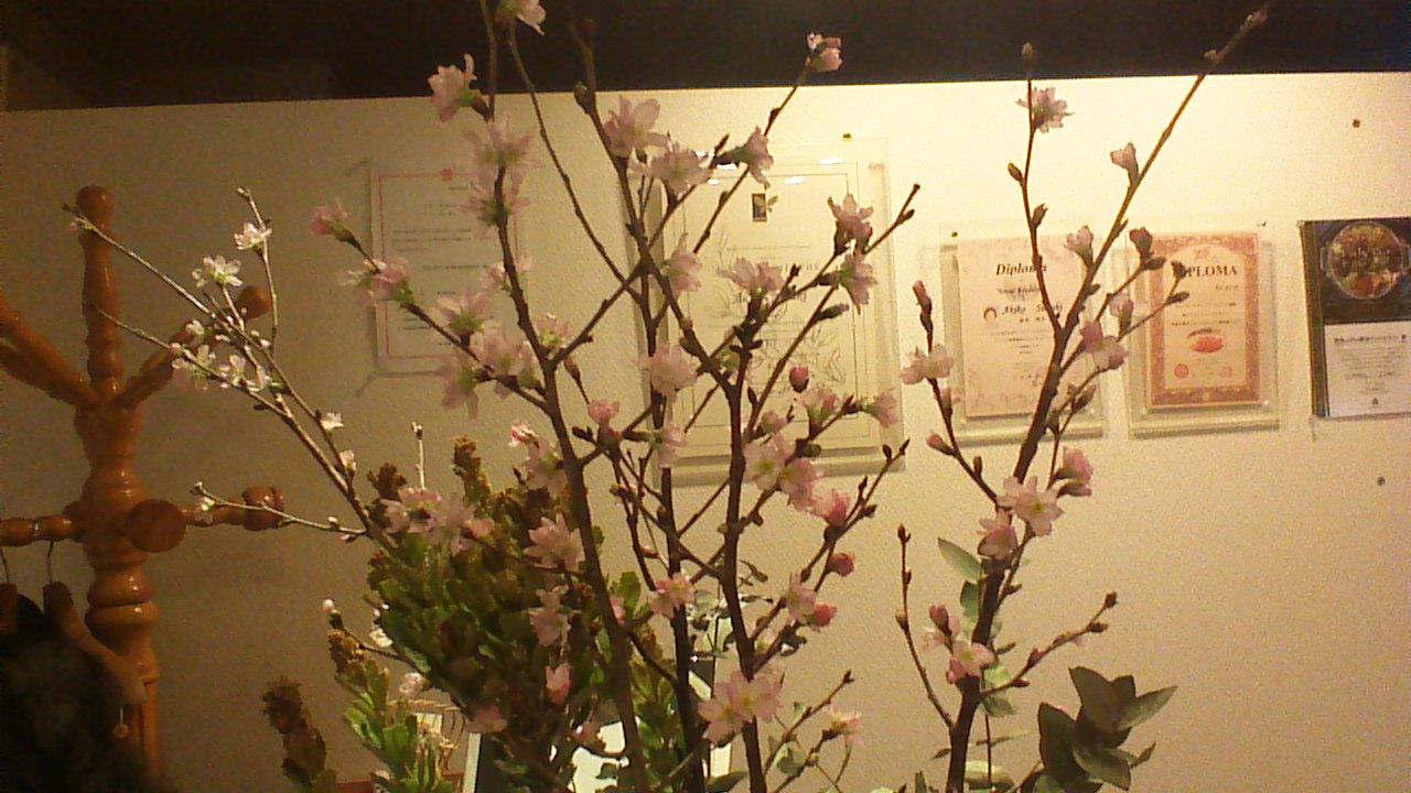 桜です(^^)