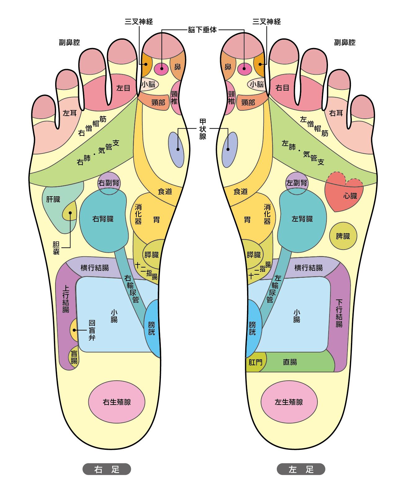 足 つぼ 効果 足つぼを押して痛いところでわかる不調と効果的な足つぼマッサージ