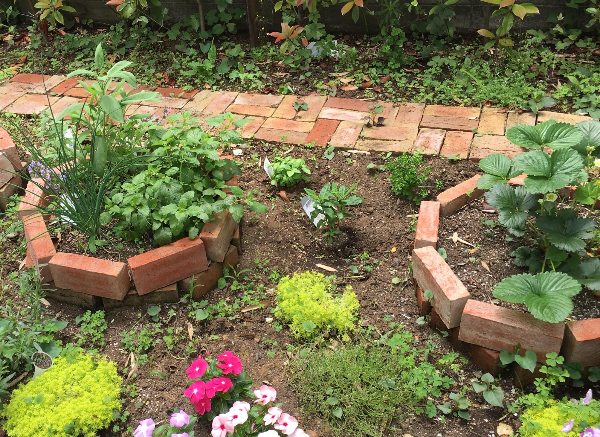 庭の写真です