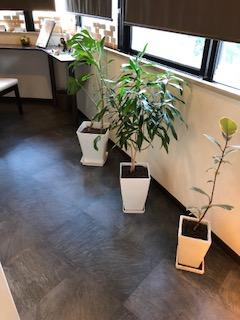 お店の観葉植物