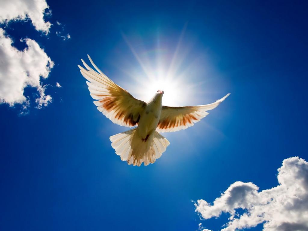 平和の日(2018年08月05日 00時00分) 楽土 広島店ブログ | EPARKリラク ...