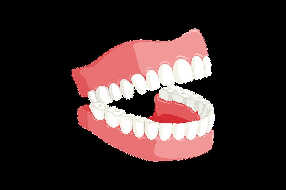 子どもの歯はどうなっているのか?