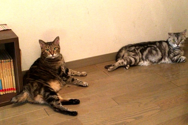 MIKA YAMAGUCHI 2匹のニャンコがお出迎え♪