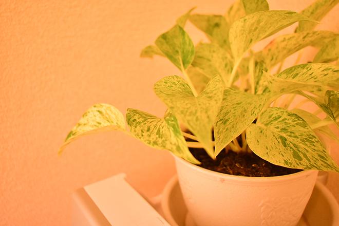 instore 癒しをテーマに、本物の植物を飾っています♪