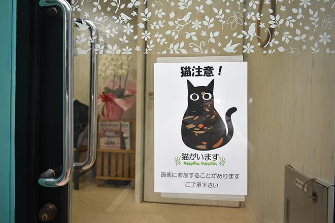 健康の森 整体院 当店には猫がおります
